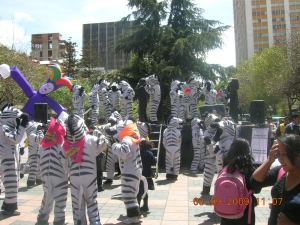 cebras bailando 3